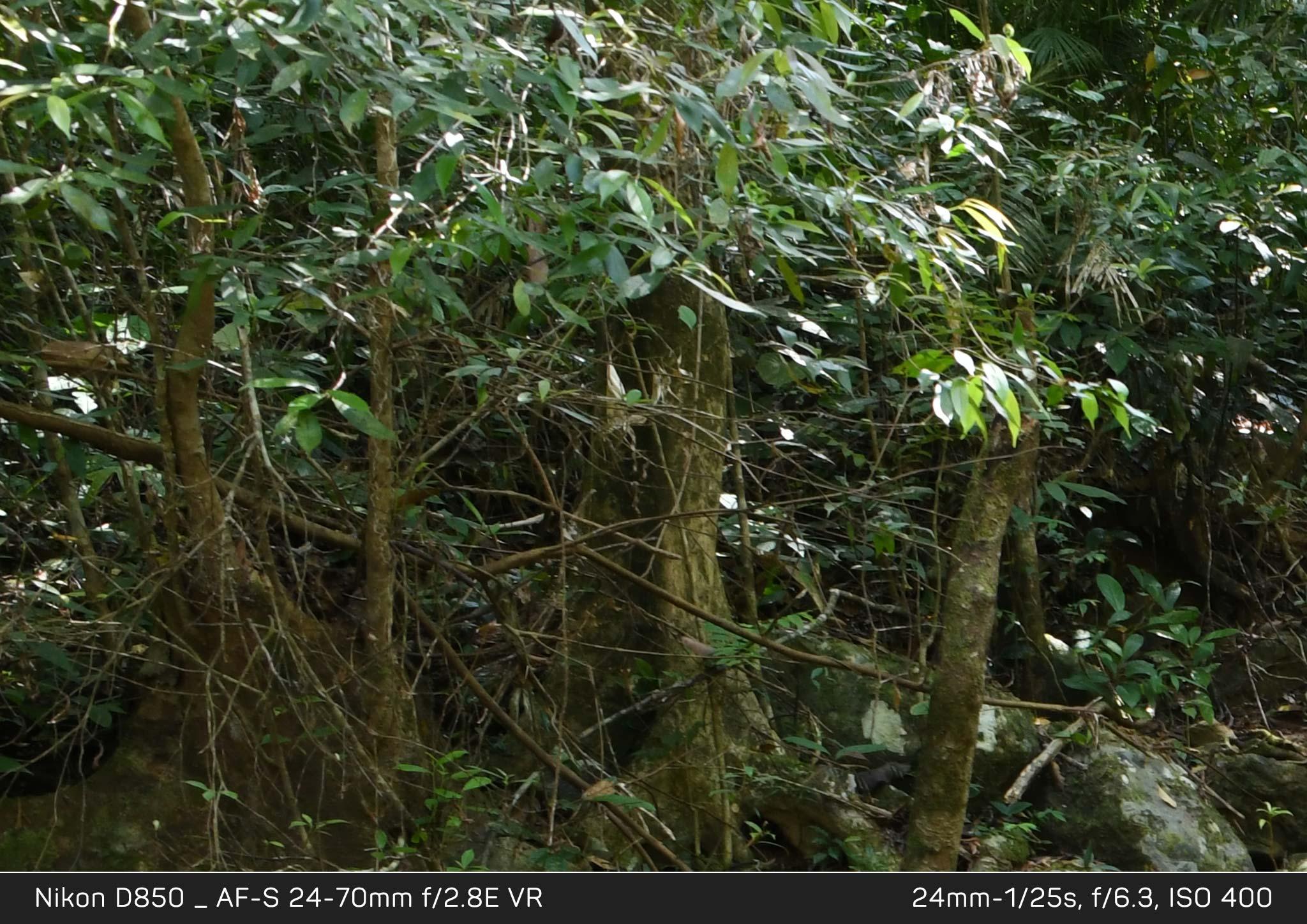 Đang tải Nikon-D850_KH2_6405_crop.jpg…