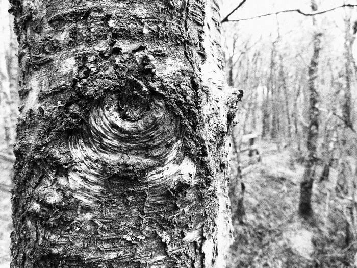 powershot-sx740-hs-sample-textures-tree-knot_260027303455669