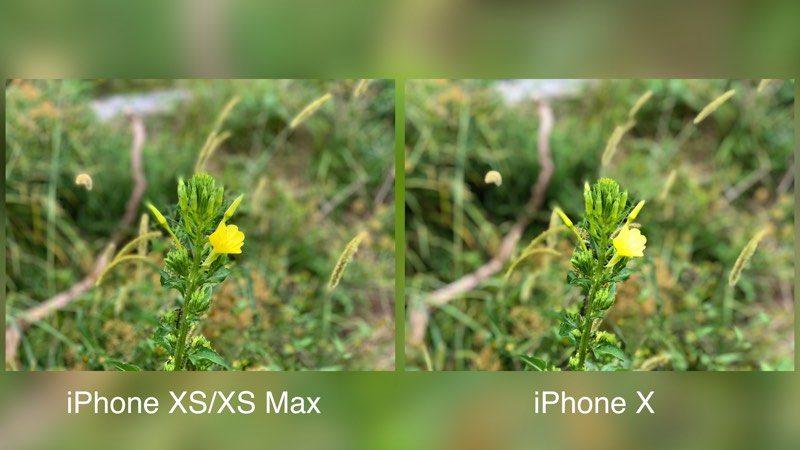 iphonexsmaxportraitmodeplant-800x450