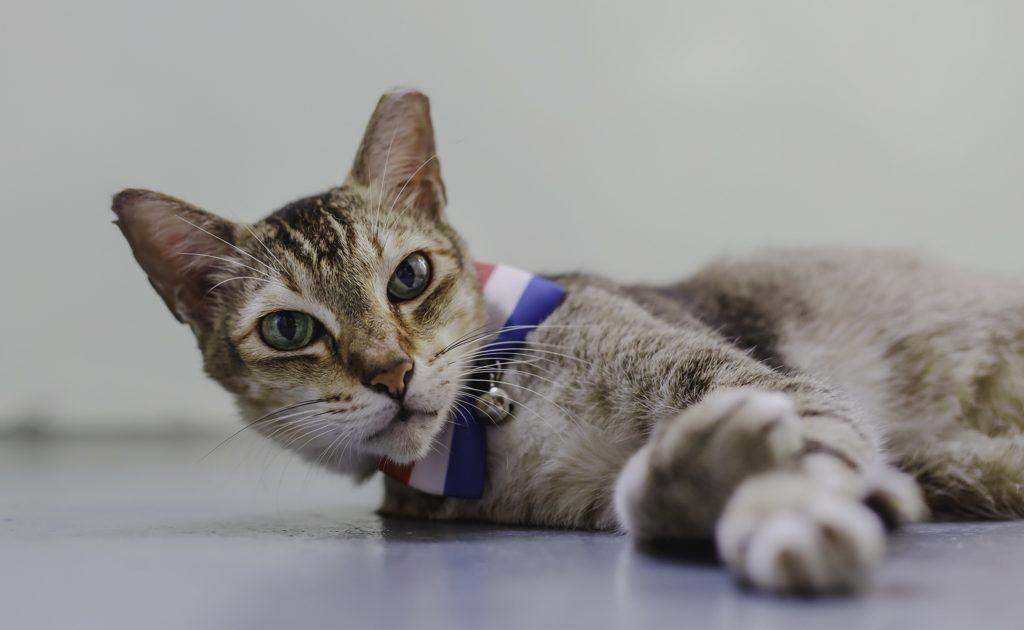 5 mẹo chụp ảnh các 'boss' mèo cưng dễ dàng hơn với Canon EOS R