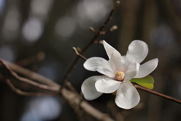F4L 24-105mm | F4 | 1/320 giây | ISO 100 Chế độ theo dõi AF của máy ảnh không có lỗi, nhưng nó vẫn tập trung vào sự kỳ thị của loài hoa này khi tôi chụp lại, giúp dễ dàng chụp ảnh với tiêu cự chính xác ở nơi tôi muốn.