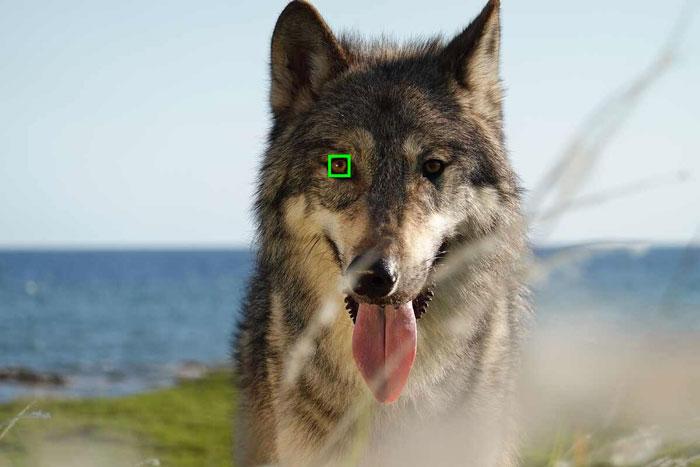 sony-rx100-vii-eye-af-animal
