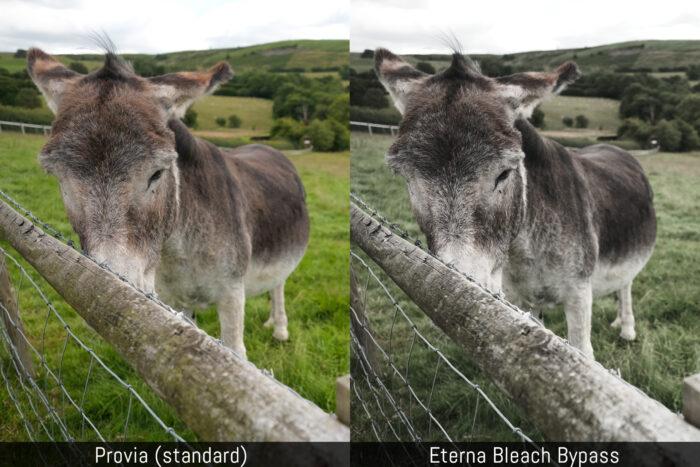 provia-vs-eterna-bleach-bypass-2-700x467